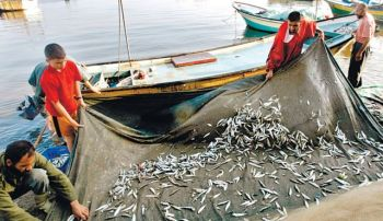 Gaza fishermen: Twelve were shot at in May by navy, says NGO. Photo by Reuters